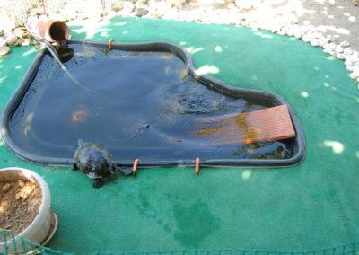 Construcció i instal·lació de piscina i basseta per les tortugues